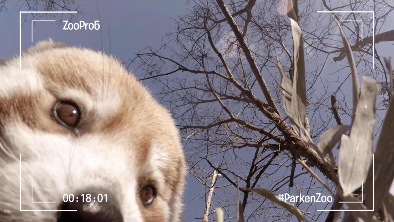 I reklamfilmerna var det ofta djuren själva som stod för filmandet.